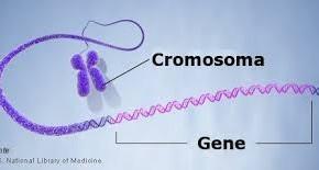 cromosomi e tumori al seno