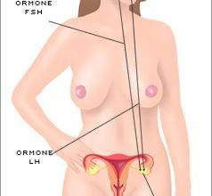 ormoni-femminili