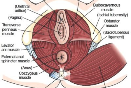 baclofene per dolore al pavimento pelvico